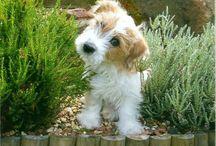Cutsie Pups