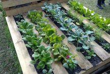 jardin dans palette