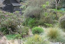 Nz native garden