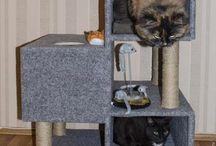кошкин дом за пару дней