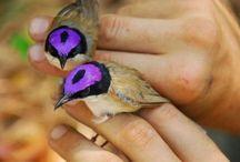 Birds to paint