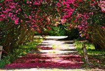 Plants & Nature / by Jennifer Hines