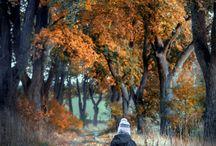 Autumn / Fall colors