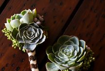 How to Use Succulents in Your Wedding