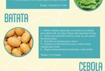 alimentos replantaveis