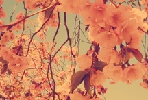 HANAKOTOBA / all about flower's language