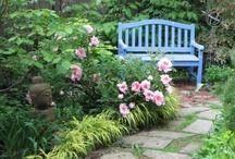 gardening  / by Audrey Chandler