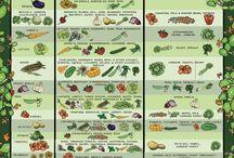 Hortalizas y jardines / Como sembrar hortalizas para atoconsumo y hacer bellos jardines / by Raul Lazaro