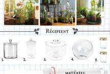 Plantes etc.