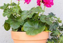 Γλάστρες - DIY flower pots