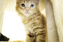 Kittens & cats / Kittens & Cats