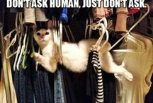 CATS ARE AWESOMESAUCE!
