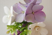 Λουλούδια Από Ζάχαρη