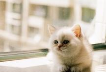 Kitties  / by Mackenzie Mobley