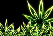 Cannabis Press