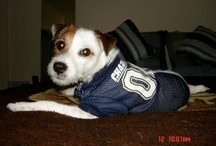 Chargers Pets / Happy National Pet Day! We're asking fans to share their favorite Charger pet photos on 4/11/2012. #ChargersPetDay / by San Diego Chargers