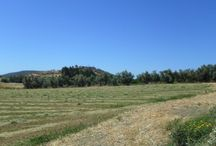 Code No.7290 A protection land for sale in the village Monagroulli in Limassol. / Code No.7290 A protection land for sale in the village Monagroulli in Limassol.  The land has an area of +/-6304 m², with Z1 zone, 6% build factor, 6% cover ratio and permission to build up to 2 floors. It has distance from the town of Limassol 15 km or 15 minutes. Has full share of title deeds.  Has a  flat surface and is facing south, also has all the amenities (water, electricity, telephone). Adjacent to road public.   Code Νο: 7290 Selling price: €130.000