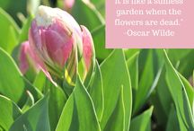 Words to Remember / Quotes paired with Stargazer Barn flowers.