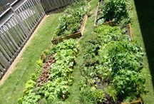 Raised garden beds / Vegetable garden ideas