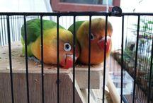mybird / my lovely baby bird