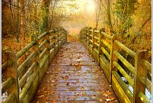 paths / by Anita Johnson