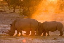 Namibian Safari Tour