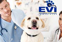 Consejos para el cuidado de tus mascotas / Es importante contar con una #veterinaria de cabecera para que tu #mascota esté sana y puedas prevenir situaciones de riesgo. http://evi.com.co/