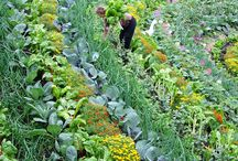 permaculture beatiful