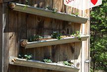 Outdoor/gardening  / by Erica Brown