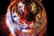 Tijgers/leeuwen (teken idee)/ tiger+lion
