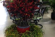 Earl May Nursery and Garden Center auf Pinterest