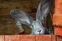 Zajačikovia/Bunny