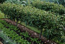 zeleninové záhrady / vegetable garden