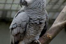 Попугаи / Животные