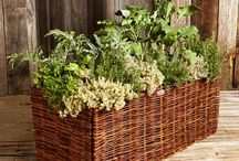 Gardening . Landscapes . Canning / Gardening, canning, outdoor spaces