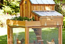Chicken houses/pens/ gyms and things !! / by Lucille Kauffman