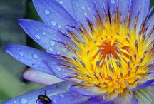 Flowers / by Vivian Ericson
