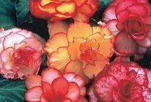 Flowers / by Melinda King Bryant