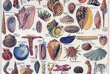 Simpukat - Seashell