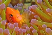 animals & sea life / by Tressa Schumacher