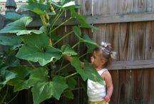 Garten - Gemüsebeet