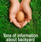 MY BACKYARD - Chickens