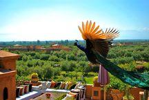 Riad Al Mendili / Riad d'exception et de charme à Marrakech Maroc. Vivez autrement au cœur de toutes les tendances du bien-être et de l'art de vivre al MANDILI Private Ressort & spa Marrakech, une des fiertés des architectures Marocaines. / by Riad Al Mendili Kasbah