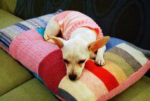 Homemade dog bed / Dog