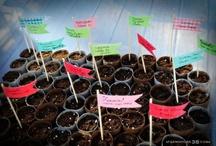 Gardening\Petit orto