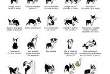 para entender a mis perros