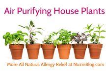 Air purifying door plants