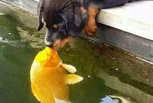 Cani e animali