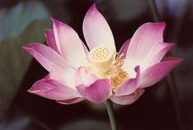 Memoir / Buddhism, Mental Health, Peace Corps, Dominican Republic