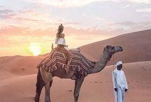 Пустыня, закаты, природа